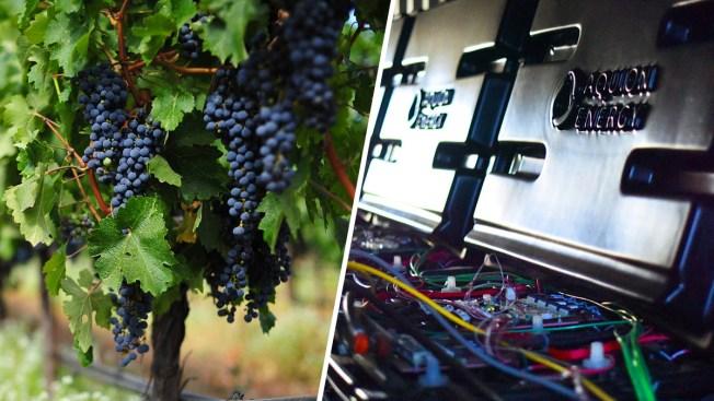 Vineyard Tests Ways to Keep Producing During Disasters