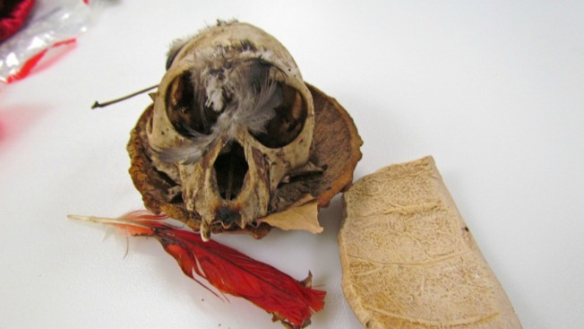 Voodoo Priest's Primate Skull, Dead Bats Confiscated at Airport