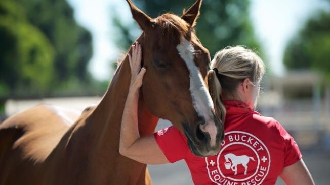 Help a Horse Day at Red Bucket Rescue