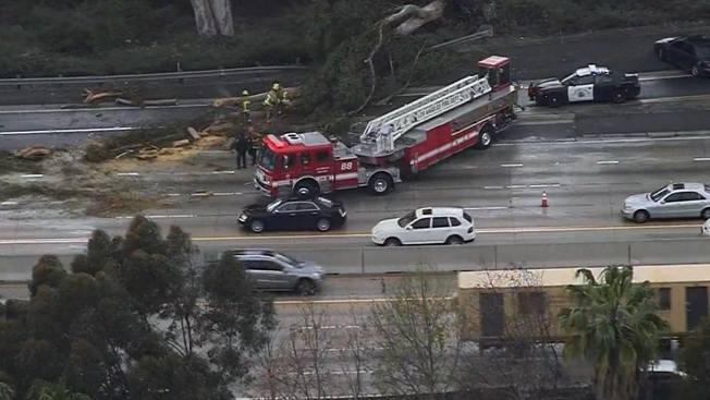 Toppled Tree Smashes Cars on 405 Freeway, Halting Onramp Traffic
