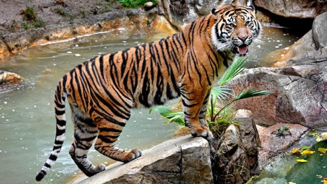 La Zoo Ticket Prices Increasing Again Nbc Southern California