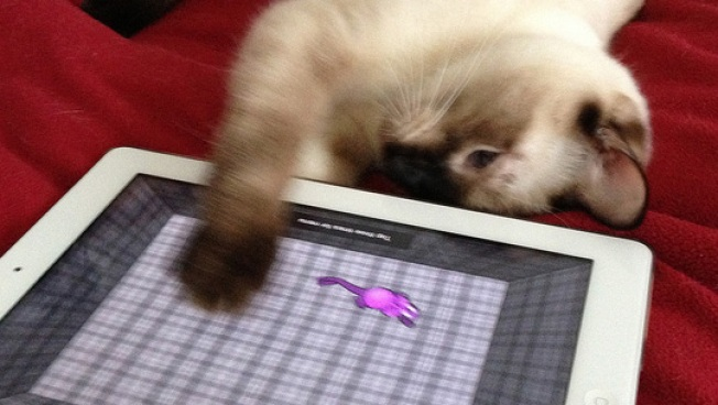 Ideas Wanted: iPad Apps for Cats
