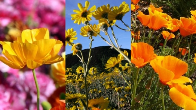 Weekend: Flowers Are in Power Around SoCal