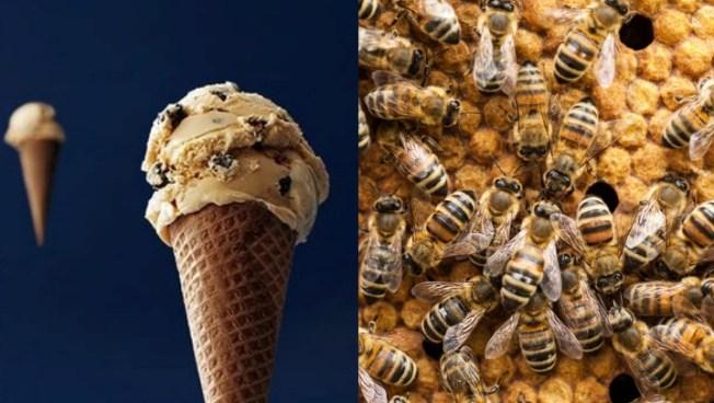 Buzz Buzz, It's Häagen-Dazs Free Cone Day - NBC Southern California