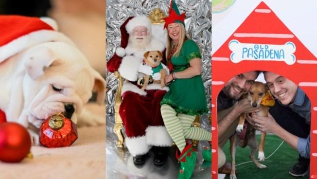 Fido Photos with Santa Now Melting Hearts