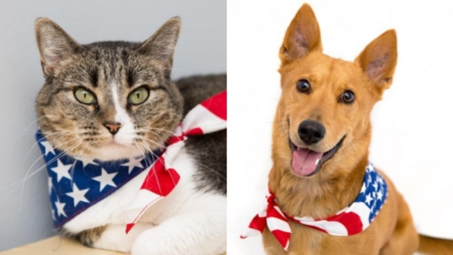 '7 Days of Freedom' at Best Friends=$7 Adoptions