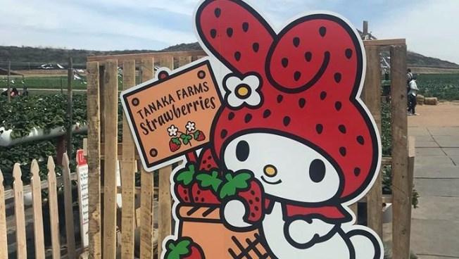 This Week: Tanaka Farms Is Open, Hooray