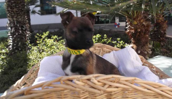 Pet of the Week: Blythe
