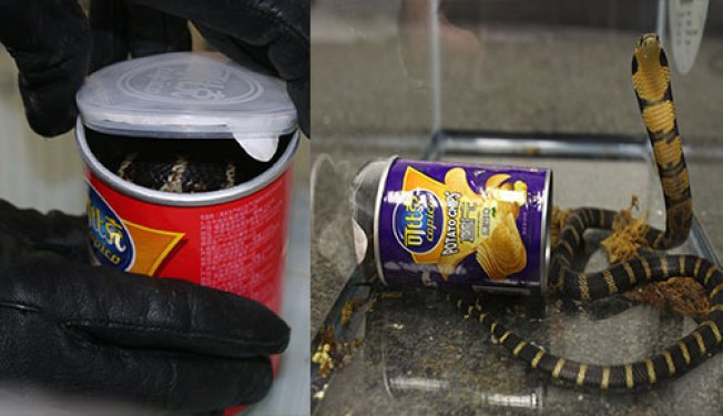 Cobras in potato chip cans lead to man's arrest on smuggling charges