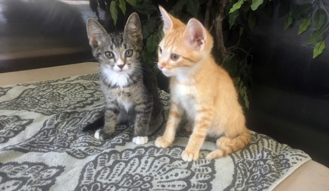 Pets of the Week: Roy and Johnny