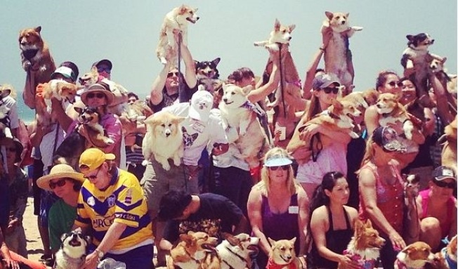 So Cal Corgi Beach Day to Romp Again