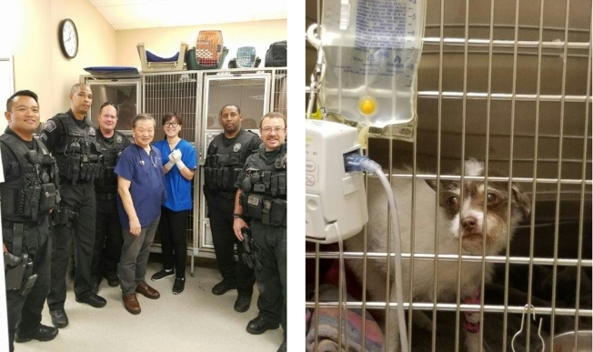 Officer Rescues Dog Trapped Under Car, Helps Pay for Surgery