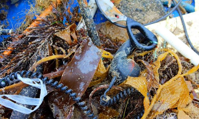 Thousands Expected at Coastal Cleanup Day