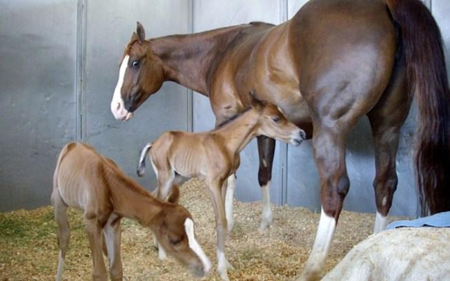 Rancho Santa Fe Sweet: Twin Foals' Fifth Birthday