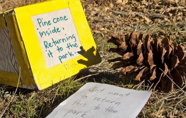 Returned to Yosemite: One Pine Cone