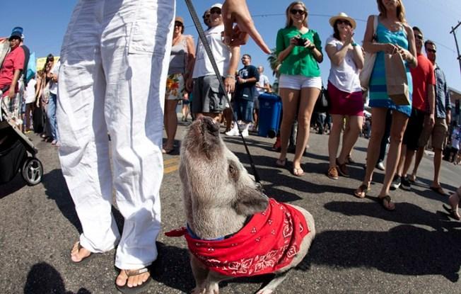Funky, Breezy Goodness: Abbot Kinney Festival