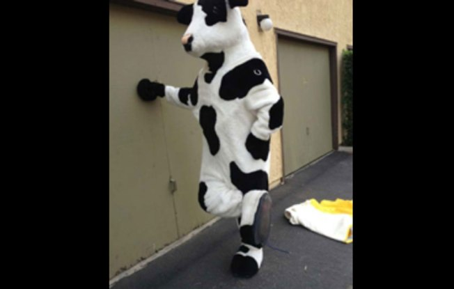 Officers Round Up Suspect, Missing Chick-fil-A Cow Costumes