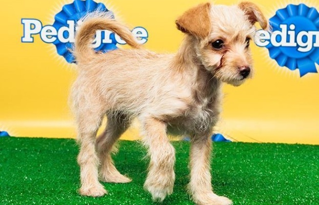 Pasadena Pooch Goes Puppy Bowl