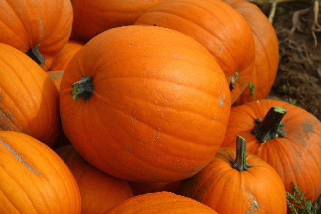 Shojin Pumpkins Up Special Menu