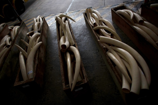 LA Files California's First Anti-Ivory Trade Charges