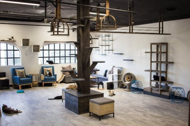 First Nonprofit Cat Cafe Opens in L.A.