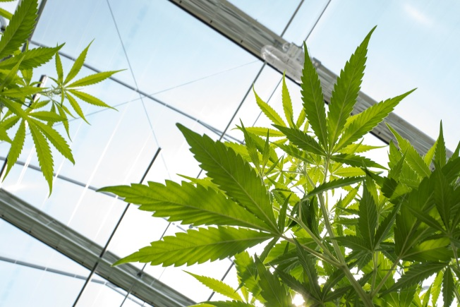 Los Angeles Won't Be Selling Weed Jan. 1