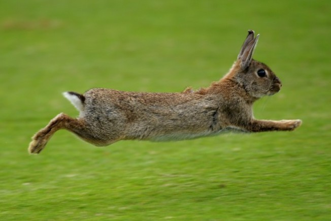 Bunnies Bounce for St. Pat's, and More Offbeat Picks