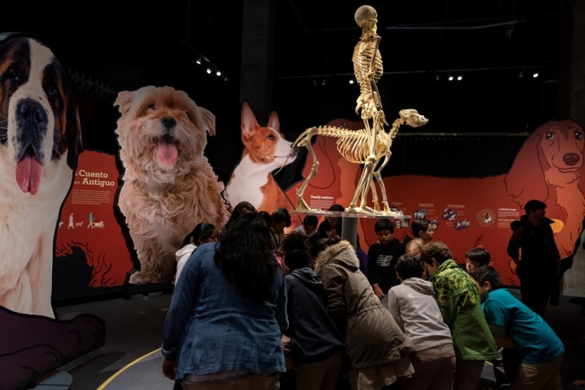 4 to Watch: How Well Do You Really Know Your Furry Best Friend? Find out at this Exhibit