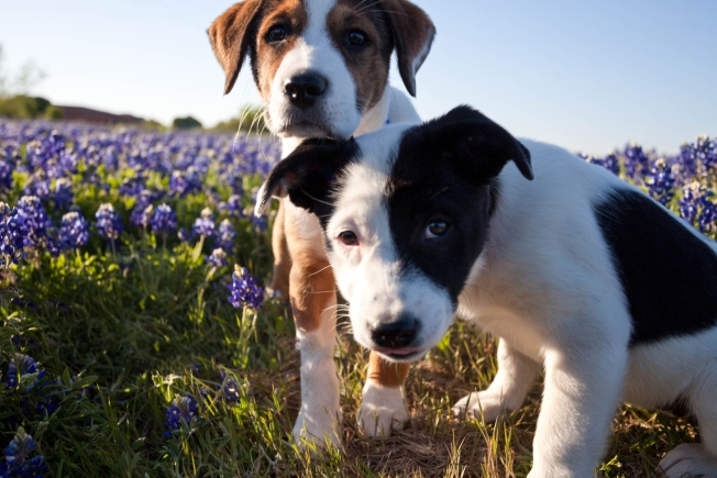 Pet Adoption Centers in Southern California