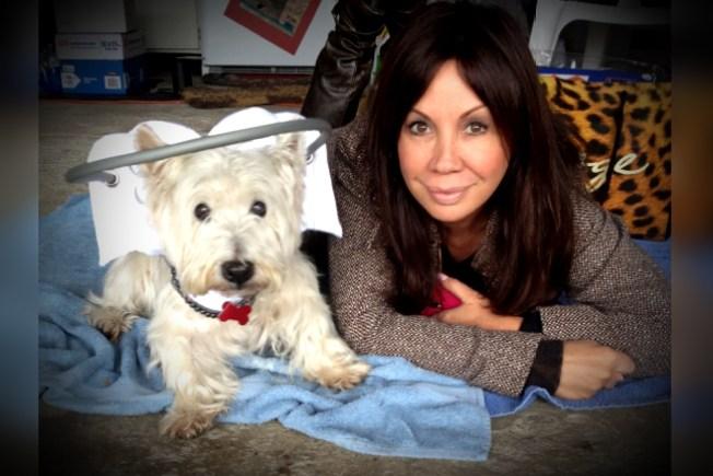 Halo For Blind Dogs Australia