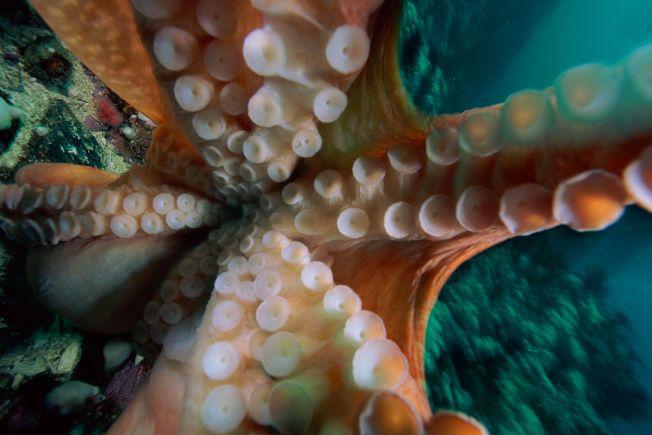 An Octopus Garden Springs to Life in Dana Point
