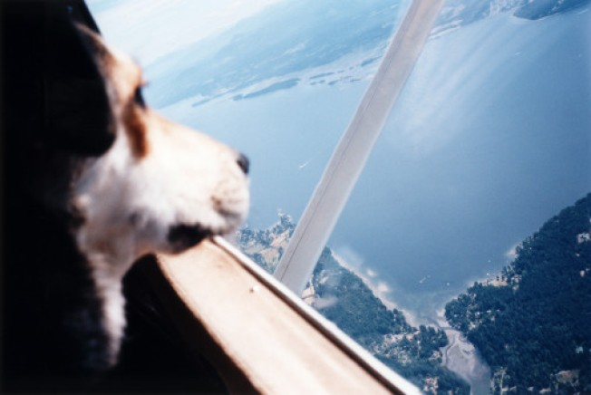 LA Pets Go First Class on New Pooch Airline
