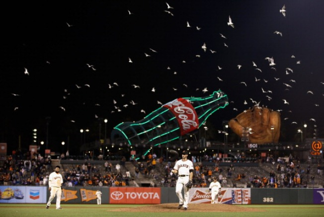 AT&T Park Seagulls Nasty Opponent for Team