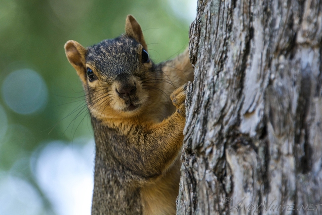 Berkeley Council Votes to Stop Feeding Squirrels