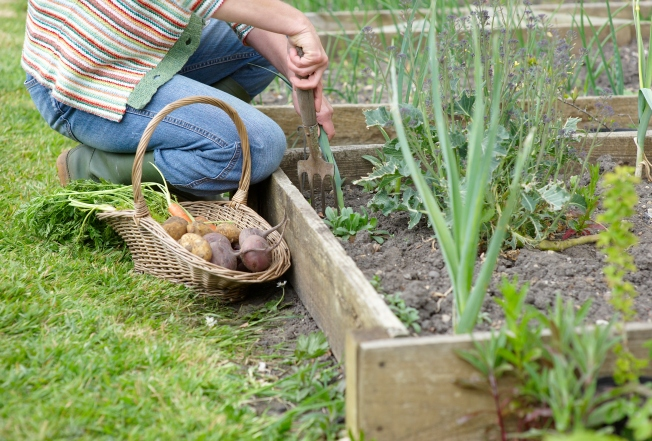 Couple Challenges Front Yard Garden Ban