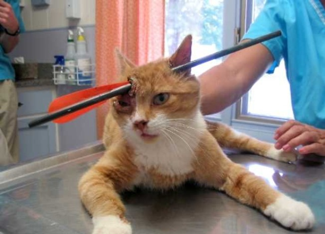 Cat Shot Through Head With Arrow