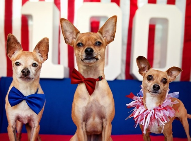 July 4th: Marathon Pet Adoption Event