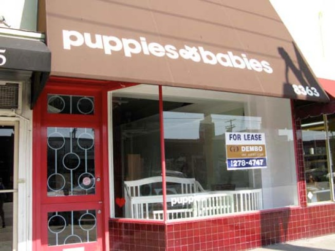 Discontinued: No More Puppies & Babies on West 3rd Street