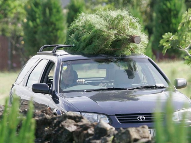 Christmas Tree Rush Begins in O.C.