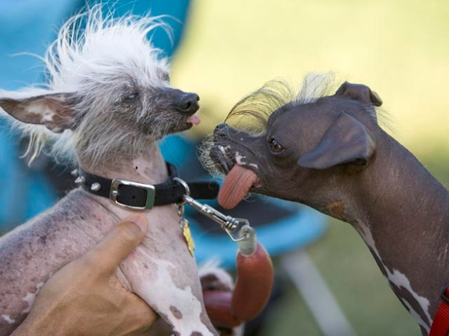 Dogs Strut Their Stuff at Ugly/Cute Dog Contest