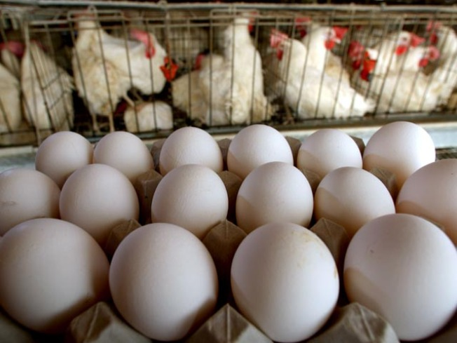 Dozens in LA County Sickened by Tainted Eggs, Frozen Fruit Pulp