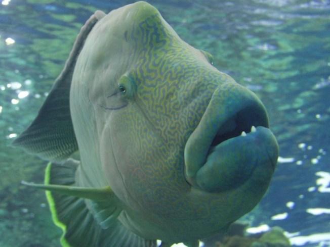 Aquarium 5k aquarium s flippers feathers fins 5k for 95 9 the fish