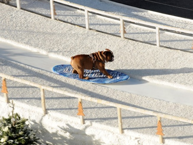This Year's -- Or Rather Next Year's -- Snowboarding Dog