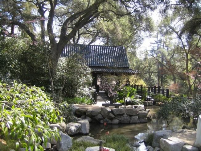 Camellia Lounge Set to Blossom