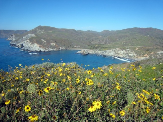 Worth the Drive: Catalina Island Volunteer Vacations
