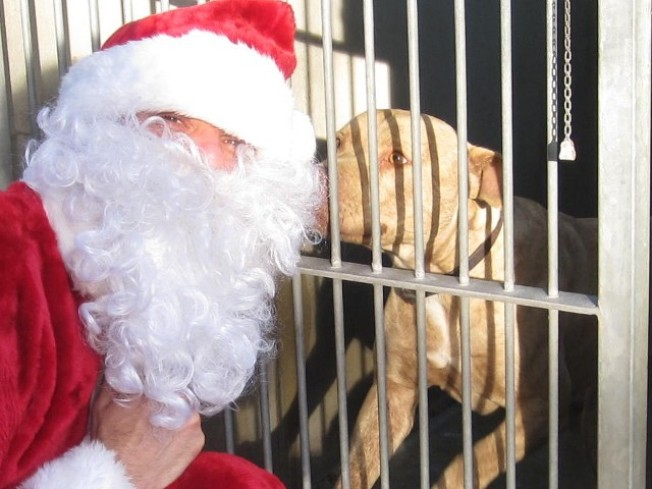 Operation Santa Paws Now Open
