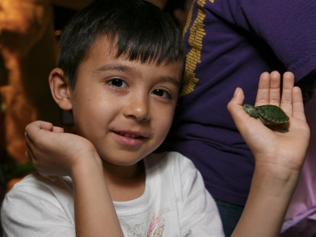Turtle Love at Natural History Museum