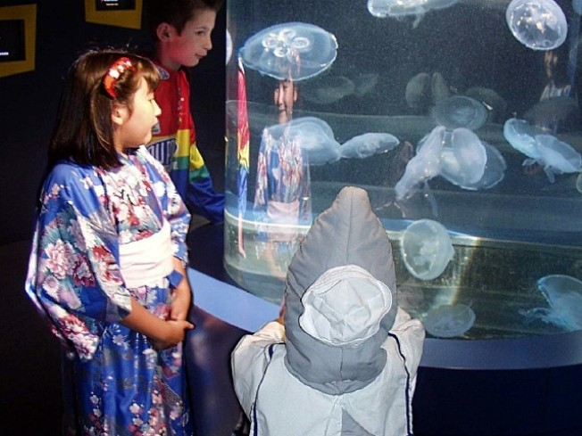 Tickets Now: Aquarium's Spooky Sleepover