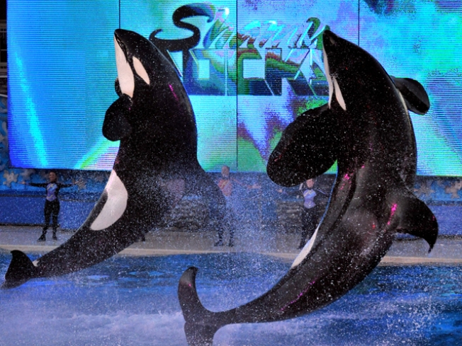 Discover SeaWorld San Diego After Dark