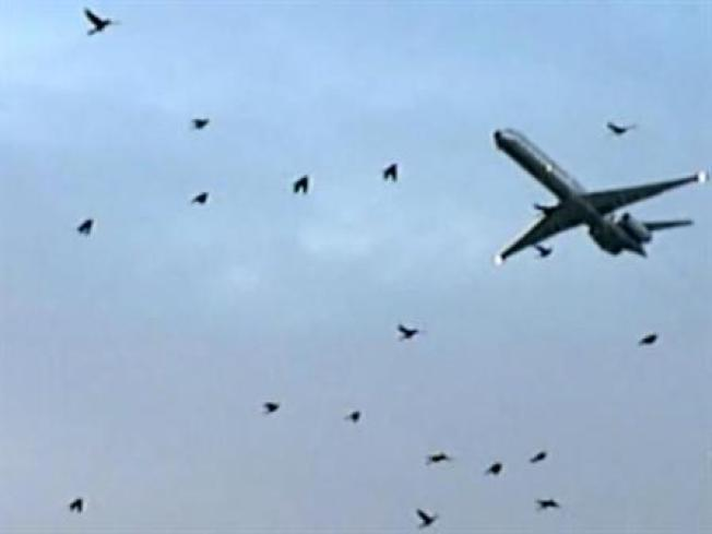 Birds Beware: Calif. Airport to Consider Bringing in Crews to Clear Airspace